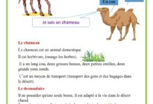 Photo of description – le chameau et le dromadaire