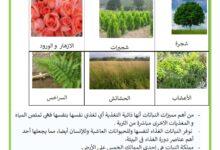 Photo of خصائص النباتات – العوامل المؤثرة على نمو النبتة