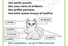 Photo of Description de mon chat