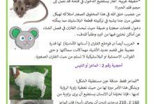 Photo of أحجيات و ألغاز : حول بعض الحيوانات