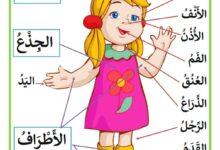 Photo of مكونات جسم الانسان : الرأس و الجذع و الأطراف