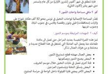 صورة موسم جني التّمور في البلاد التونسيّة – فوائد التّمور