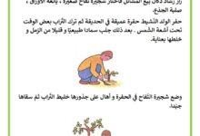Photo of شجرة رشاد – قصة تلخص مراحل نمو النبتة