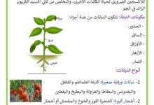 صورة مراحل النمو عند النبتة