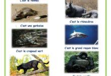 Photo of reconnaître les animaux sauvages