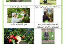Photo of النباتات المغروسة : الأشجار المغروسة – أعمال الفلاح