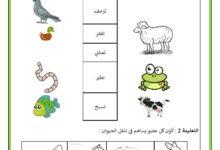 Photo of تقييم توجيهي لتلاميذ السنة الثانية – مادة الايقاظ العلمي- السداسي الاول