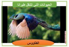 صورة معلقات : الحيوانات التي تتنقل طيرانا