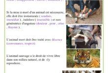 صورة les droits des animaux
