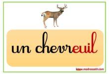 صورة affichage de classe – 4 ème année – des mots avec ouil euil ouille euille euil