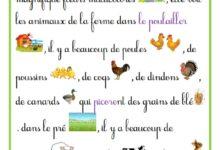 Photo of production écrite – 3 ème année – les animaux de la ferme