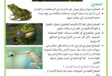 Photo of الحيوانات البرمائية – مثال : الضفدعة و التمساح