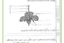 صورة امتحان الثلاثي الثالث في مادة الايقاظ العلمي السنة السادسة