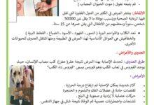 Photo of داء الكلب : الأعراض و الوقاية