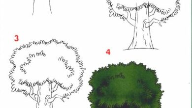 Photo of تعليم الرسم للأطفال خطوة خطوة : رسم الطبيعة
