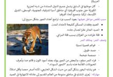 Photo of حيوان النمر
