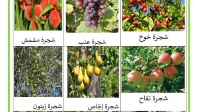 صورة النباتات المغروسة والنباتات التلقائية