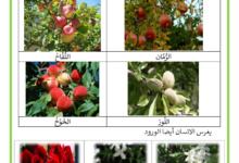 Photo of النباتات المغروسة و المزروعة ملخص : النباتات المزروعة والمغروسة ماذا نغرس وماذا نزرع؟