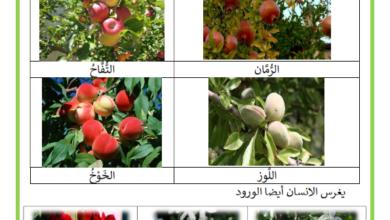 صورة النباتات المغروسة و المزروعة ملخص : النباتات المزروعة والمغروسة ماذا نغرس وماذا نزرع؟