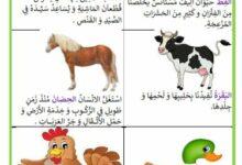 صورة منافع الحيوانات الأليفة