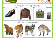 Photo of منافع الحيوانات البرية