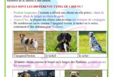 صورة les différents rôles de chiens