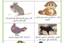 Photo of التغذية عند الحيوانات الحيوانات الكالشة للسنة الأولى ابتدائي