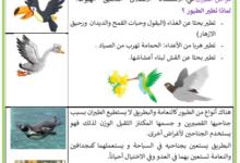 صورة التنقل عند الحيوانات : الطّيور التي تطير و الطّيور التي لا تطير