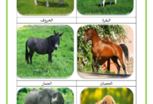 Photo of الحيوانات اللاحمة و العاشبة و الكالشة – التغذية عند الحيوانات صور