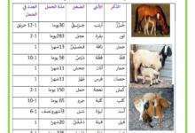 صورة الحيوانات الولودة الذكر و الانثى و اسم الصغير و مدة الحمل