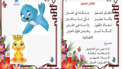 Photo of محفوظات الطائر الصغير مسكنه في العش
