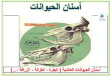 Photo of أسنان الحيوانات – معلقات ايقاظ علمي – السنة 4