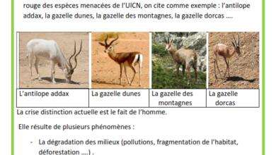Photo of Les animaux menacés en voie de disparition en Tunisie