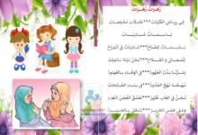 صورة محفوظات زهرات زهرات