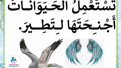Photo of معلقات التنقل عند الحيوانات – التنقل في الجو الطيران للسنة الثالثة الثلاثي الأول