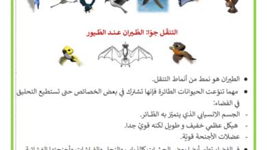 Photo of التنقل جوّا – الطيور التي تطير و التي لا تطير