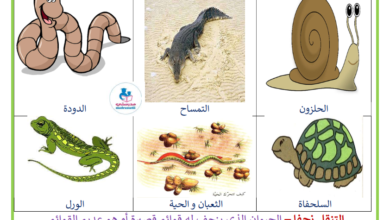 Photo of معلقات التنقل زحفا عند الحيوانات