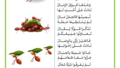 Photo of محفوظات حول التعاون و التضامن و التآخي – النملة