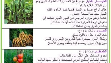 صورة النبات المزروعة – الخضر