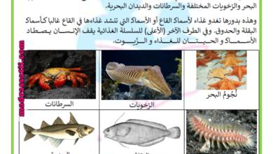 صورة السلسلة الغذائية البحرية
